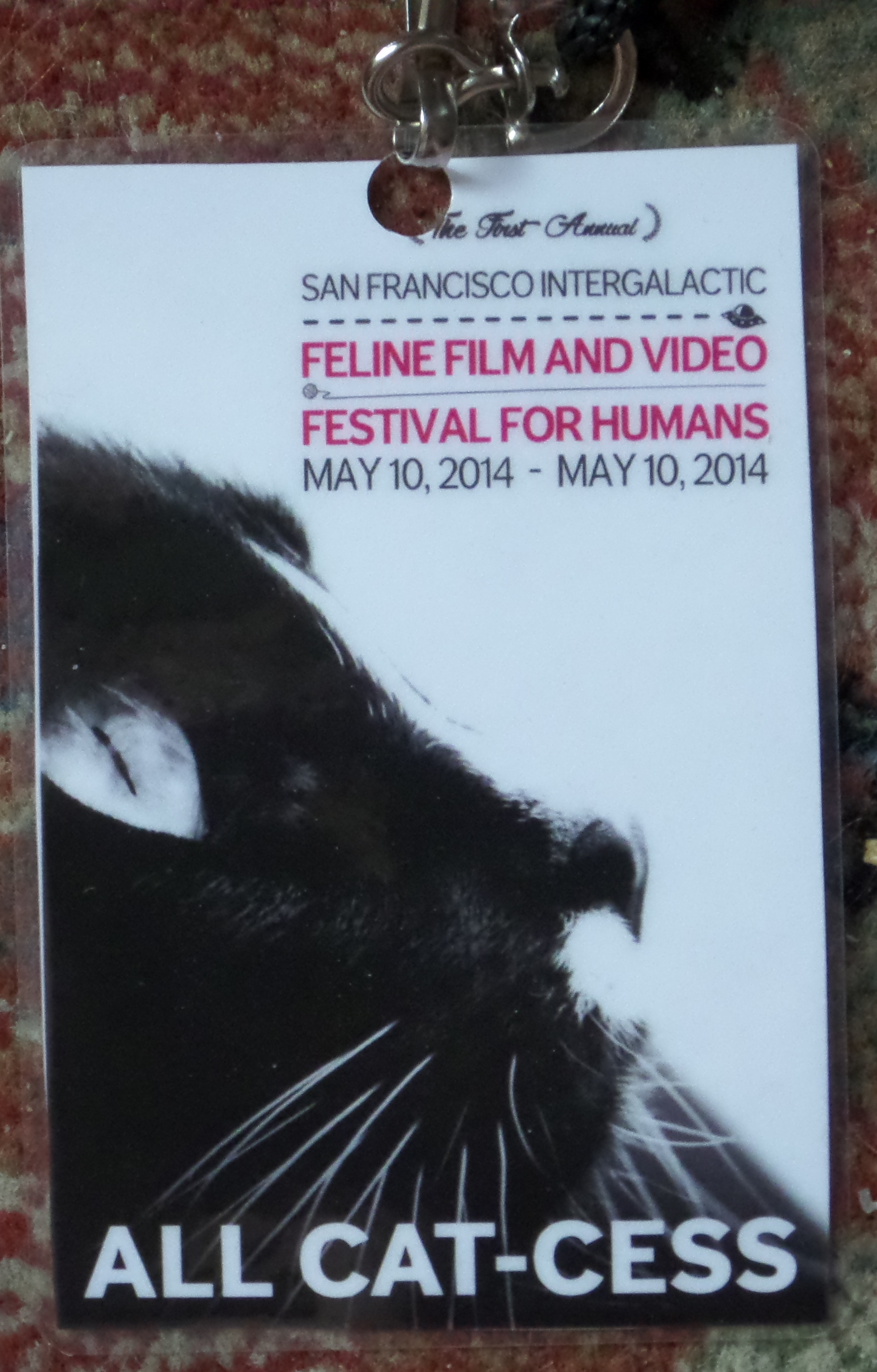 A Purr-fect Day: The First Annual San Francisco